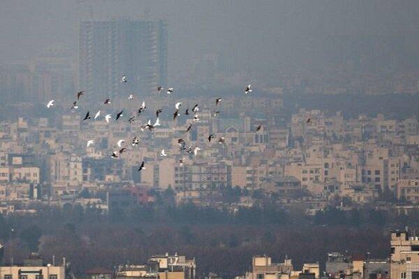رتبه تهران در میان آلوده ترین شهرهای امروز جهان