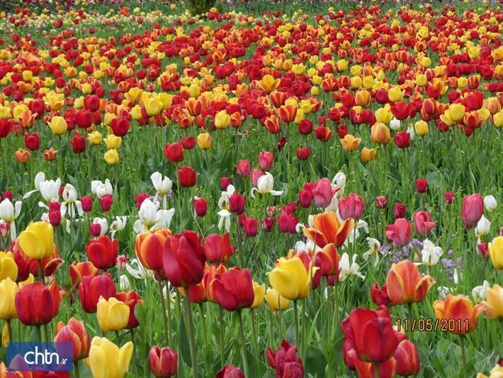 بازدید مجازی از باغ لاله های کرج از 24 فروردین ماه