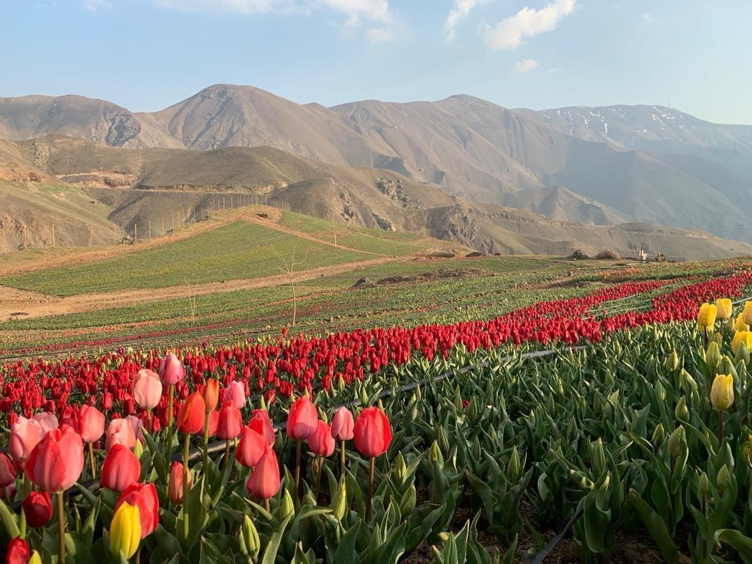 نمایی از دشت گل در روستای کندر
