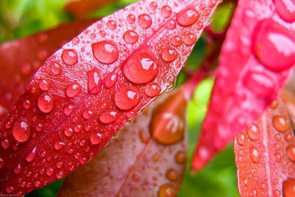 میزان بارش های کشور 33 درصد رشد کرد