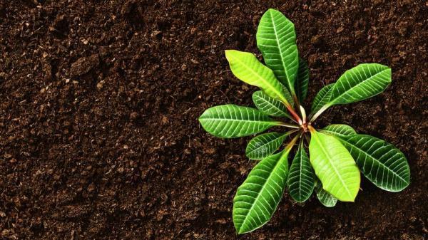 خاک مناسب روف گاردن ، راهنمای جامع انتخاب بهترین خاک