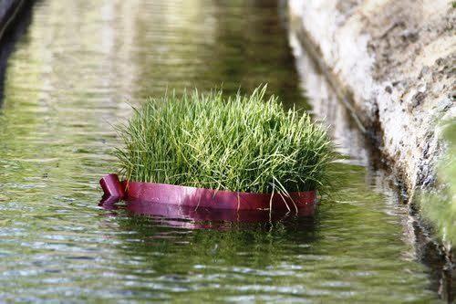 روز سیزده بدر چرا سبزه را به آب می اندازند؟
