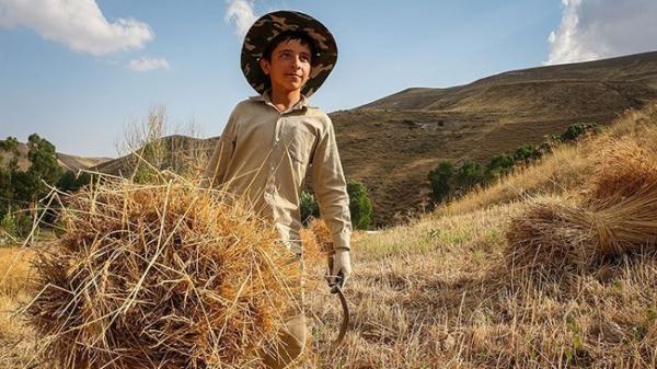 موانع سه گانه در برابر بخش کشاورزی